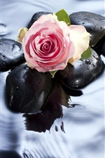 Preview iPhone wallpaper Roses in water