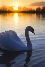 Preview iPhone wallpaper Swan lake at dusk
