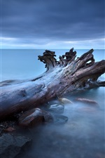 Preview iPhone wallpaper Tree roots fog rocks sea