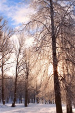 Preview iPhone wallpaper Winter snow cold frost trees