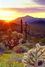Preview iPhone wallpaper American scenery, the mountain is covered with cactus