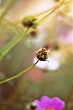 Preview iPhone wallpaper Beautiful garden, flower buds