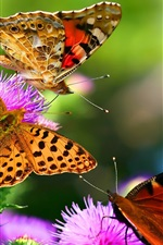 Beautiful insects, butterflies