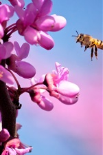 Preview iPhone wallpaper Bee and purple flowers
