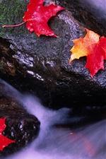 iPhone壁紙のプレビュー カナダの風景、ストリーム内の赤いカエデの葉