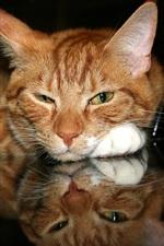 Close their eyes meditatively cat