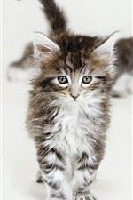 Cute kittens walking