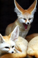 Preview iPhone wallpaper Foxes family