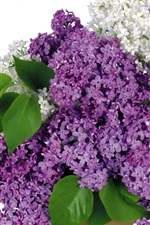 Preview iPhone wallpaper Lilac flowers