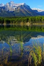Национальные парки в Банф Канада