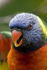 Preview iPhone wallpaper Parrot birds close-up
