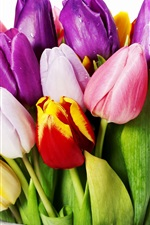 Preview iPhone wallpaper Tulip bouquet in a vase