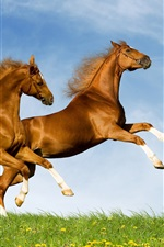 Preview iPhone wallpaper Two horses