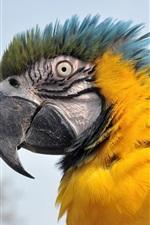 Preview iPhone wallpaper Vigilance of parrots