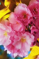 미리보기 iPhone 배경 화면 봄의 꽃 아름다운 꽃