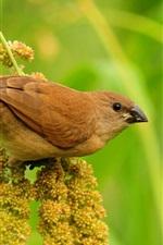Preview iPhone wallpaper Brown bird
