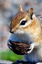 Preview iPhone wallpaper Cute little squirrel