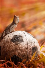 Preview iPhone wallpaper Football with lizard