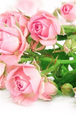 Preview iPhone wallpaper Fresh pink roses