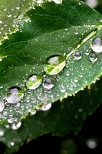 Preview iPhone wallpaper Green leafy raindrops macro