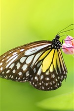 Preview iPhone wallpaper Insect butterfly flowers