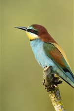 Preview iPhone wallpaper Kingfisher telephoto photography