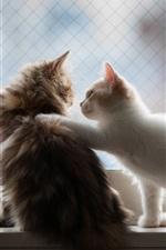 saudação Kitten