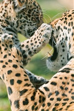 Preview iPhone wallpaper Leopard affection