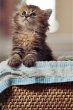 미리보기 iPhone 배경 화면 바구니에 작은 고양이