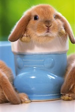 Preview iPhone wallpaper Lovely pets, rabbit