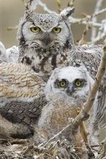 Preview iPhone wallpaper Owl family