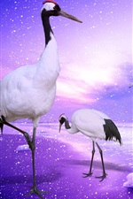 Preview iPhone wallpaper Red-crowned crane paradise