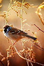 Preview iPhone wallpaper Sparrows in the fall