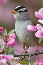 Preview iPhone wallpaper Spring peach blossom and the birds
