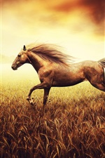 Preview iPhone wallpaper The horse runs in a cornfield