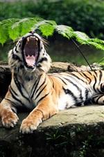 The tiger's roar