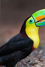 Preview iPhone wallpaper Toucan birds close-up