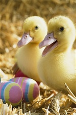 Preview iPhone wallpaper Two little ducks and Easter eggs