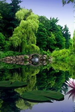 Preview iPhone wallpaper Water lilies flowers in the lake
