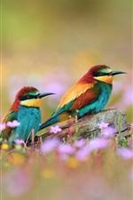 Preview iPhone wallpaper Wildflowers beautiful kingfisher