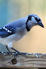 Preview iPhone wallpaper A blue bird close-up