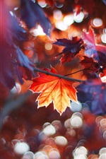 Preview iPhone wallpaper Autumn leaves, red maple leaves
