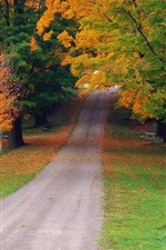 Preview iPhone wallpaper Autumn maple forest road
