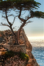 Preview iPhone wallpaper Coast rock cliff tree
