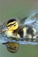 Preview iPhone wallpaper Cute little duck swimming