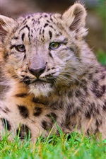 Preview iPhone wallpaper Cute little leopard close photography