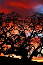 Preview iPhone wallpaper Dusk under the tree silhouette beauty