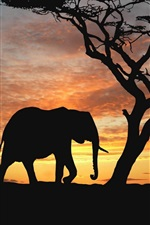 Preview iPhone wallpaper Elephants in the sunset