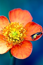 Preview iPhone wallpaper Flowers and insects wasp macro photography