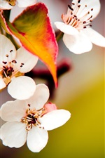Preview iPhone wallpaper Fruit trees blossom macro
